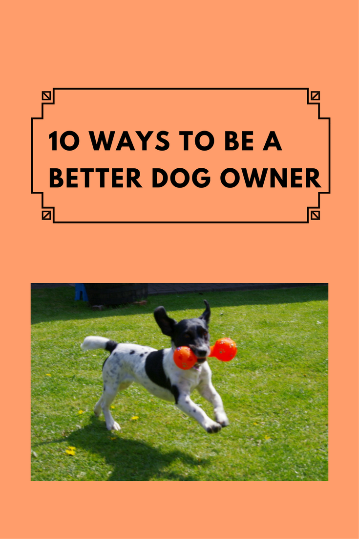 How To Be A Better Dog Owner Waggy Tales